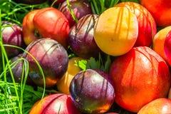 Mogen frukt på gräset i trädgården Persikor plommoner arkivbild
