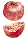 Mogen granatäpple och dess halva vektor illustrationer