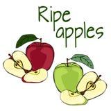 mogen grund white för äpplebakgrundsdof Royaltyfria Bilder