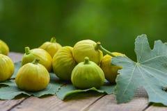 Mogen gul fikonträd Arkivbild