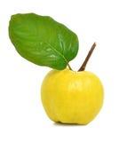 Mogen gul quince Royaltyfri Foto
