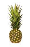 Mogen hel ananas som isoleras på white Arkivfoton