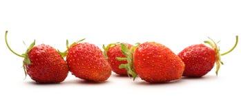 mogen jordgubbe Fotografering för Bildbyråer