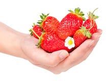 mogen jordgubbe Arkivfoto