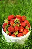 Mogen jordgubbe i hink Arkivbilder