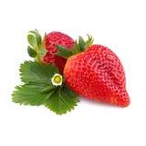 mogen jordgubbe med bladet Royaltyfri Fotografi