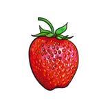 Mogen jordgubbe som isoleras på vit bakgrund Royaltyfri Fotografi