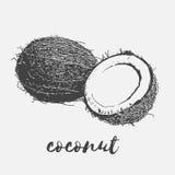Mogen kokosnötstrikt vegetarian royaltyfri illustrationer