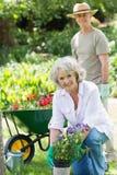 Mogen kvinna som är förlovad, i att arbeta i trädgården med mannen i bakgrund Arkivbild