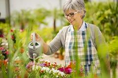 Mogen kvinna som bevattnar blommor Royaltyfria Foton