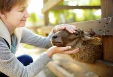 Mogen kvinna som daltar får Folk i dalta zoo Person som har gyckel i lantgård med djur arkivbilder