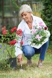 Mogen kvinna som ut planterar växter i trädgård Arkivfoto