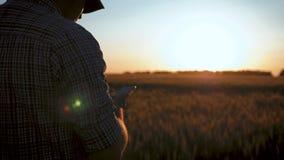 Mogen man f?r agronom som anv?nder smartphonen i ?kerbruk lantg?rd Nära övre bonde med mobiltelefonen i händer i fältet på stock video