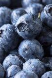 Mogen och saftig ny vald blåbärcloseup Royaltyfri Foto