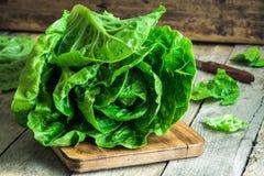 Mogen organisk Romano för grön sallad arkivbild