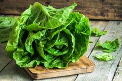 Mogen organisk Romano för grön sallad arkivfoton