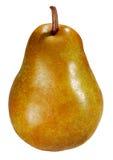 mogen pear Arkivbild
