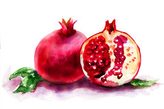 Mogen pomegranatefrukt vektor illustrationer