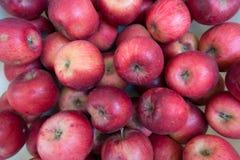 Mogen röd äppleJonathan cultivar royaltyfri fotografi
