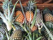 Mogen säsongsbetonad ananas Arkivfoton