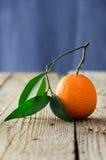 mogen tangerine royaltyfri foto