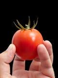 Mogen tomat Royaltyfria Bilder