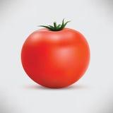 Mogen tomat för Photorealistic symbol Royaltyfri Fotografi