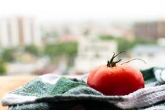Mogen tomat på träbräde Arkivbilder