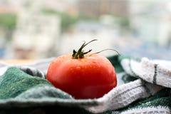 Mogen tomat på träbräde Royaltyfria Foton