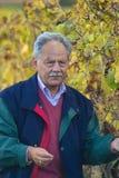 mogen vinproducent Arkivfoto