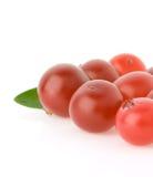 mogen white för cranberry arkivfoto