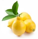 mogen white för hög citronfotokvalitet Arkivbild