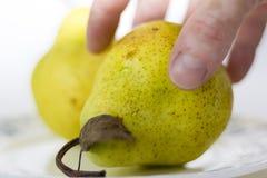 mogen yellow för pear Fotografering för Bildbyråer