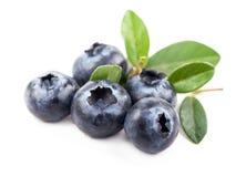 Moget blåbär Royaltyfria Bilder