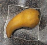Moget Bosc päron. Arkivbilder