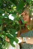 moget Cherry Royaltyfri Fotografi
