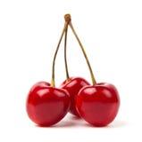 moget Cherry Arkivbilder