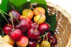 moget Cherry royaltyfri foto