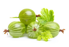 Moget grönt krusbär med det isolerade bladet Royaltyfri Bild