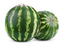 Moget vattenmelonbär som isoleras på white arkivbilder