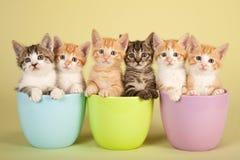 Moggie kattungar fotografering för bildbyråer
