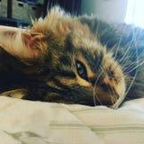 Moggy Mindfulness- Sleepy Kitten Cat stock photo