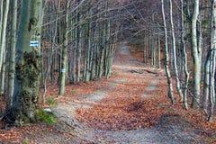 Mogielica Peak - Beskid Wyspowy, Poland Royalty Free Stock Photo