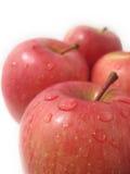 mogna äpplen Royaltyfri Bild