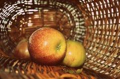 Mogna äpplen i gnäggande-korgen arkivbild