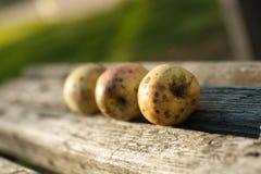 Mogna äpplen ligger på en träbänk fotografering för bildbyråer