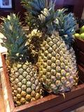 mogna ananas Arkivfoton