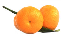 Mogna apelsiner Arkivbild