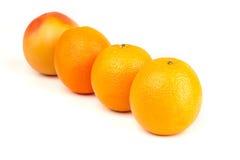 Mogna apelsiner och grapefrukt Arkivfoto