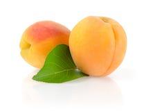 Mogna aprikors med bladet Royaltyfri Bild